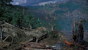 deforestation-indonesia