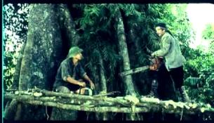 Tree Cutters